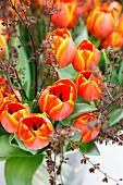 Strauß mit orangefarbenen Tulpen