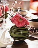 Pink ranunculus in vase decorating spring table