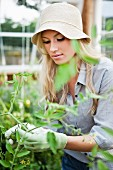 Young woman wearing hat tending plants