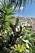 Palm trees and cacti on stone wall with view if Sicilian town