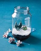 Mini-Terrarium mit Sukkulenten in einem Schraubglas