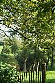 Lattenzaun neben Wiese und Bäumen