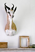 Hunting trophy above wooden picture frame and box on mantelpiece