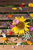 Various flowers on wooden boards