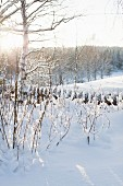 Snowy bushes in front of picket fence and view of winter landscape