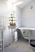 Araukarie in einer Waschschüssel auf dem Ständer neben der Wanne