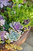 Close up of succulent plants in planter