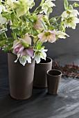 Hellebores in brown vase