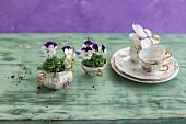 Coffee set planted with violas