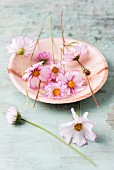 Edible cosmos flowers on plate