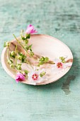 Edible mallow flowers on plate