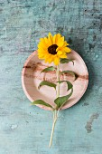 Edible sunflower on plate (top view)