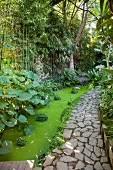 Weg entlang eines Teichs mit Wasserlinsen im Dschungel-Garten