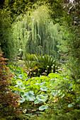 Eingewachsener, exotischer Garten mit Lotus