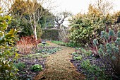 Path leading through herbaceous borders in wintry garden