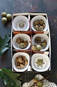 Paper cake cases and acorns in divided box