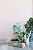 Arrangement of succulents in ceramic pots