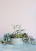 Various succulents in planter against pastel background