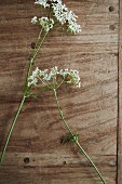 Two sprigs of cow parsley arranged on wooden surface