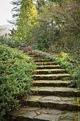 Curved stone steps leading through garden