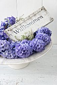 Welcome sign and blue hyacinths on cake stand