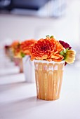 Apricot dahlias in row of vases