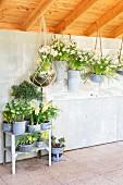 Frühlingsblumen in Blumenampeln und in Vintage Übertöpfen im Gartenhaus