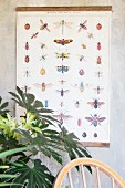 Vintage wall chart with illustrations of insects