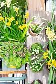 Vintage Pflanzendekoration mit Frühlingsblumen