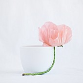Pink poppy leaning against white cup