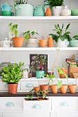 Various pots, terracotta pots and plant on white shelves