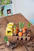 Easter arrangement of eggs and narcissus bulbs in recycled paper seed tray