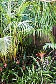Blick in den Dschungel aus exotischen Pflanzen