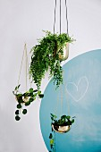 Hanging plant hanging baskets against a wall with a blue circle