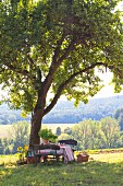 Picnic below apple tree in green meadow with view of sunny landscape
