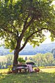 Picknick im Grünen unter Apfelbaum mit sonnigem Landschaftsblick