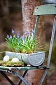 Österliches Arrangement auf Vintage-Klappstuhl mit Eiern auf Moos und Traubenhyazinthen