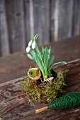 Easter arrangement of snowdrops, moss and egg shells