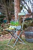 Easter arrangement of eggs, moss and grape hyacinths in zinc trough on vintage folding chair