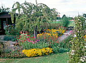 Well-kept allotment garden with ornamental cherry