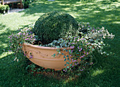Large clay bowl with book ball, ivy