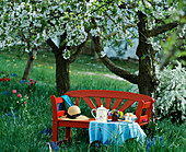 Red bench and breakfast table under blooming cherry