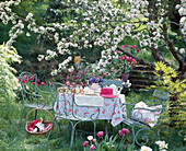 Seating under blossoming apple tree