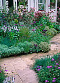 Herb bed with garlic, columbine, thyme, wormwood, mullein