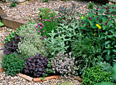 Herb bed, thyme, basil, chives, sage