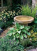Bird bath made of natural stone, Hosta (Funkie)