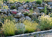 Rock garden with Armeria maritima (carnation), Dianthus (carnation)