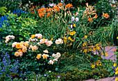 Physocarpus opulifolius 'Darts Gold', Rosa 'Tequila' (bed rose)