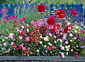 Summer flower bed with annuals