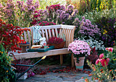 Autumnal seat with autumnal branches, Dendranthema and dahlias